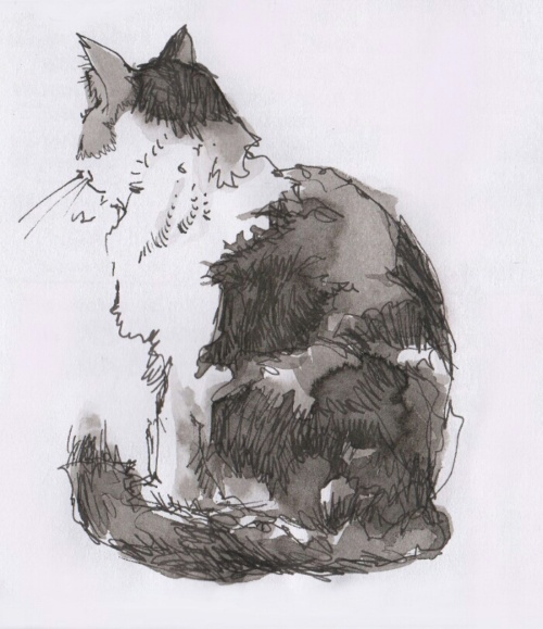 drawing of cat made with permanent fountain pen ink